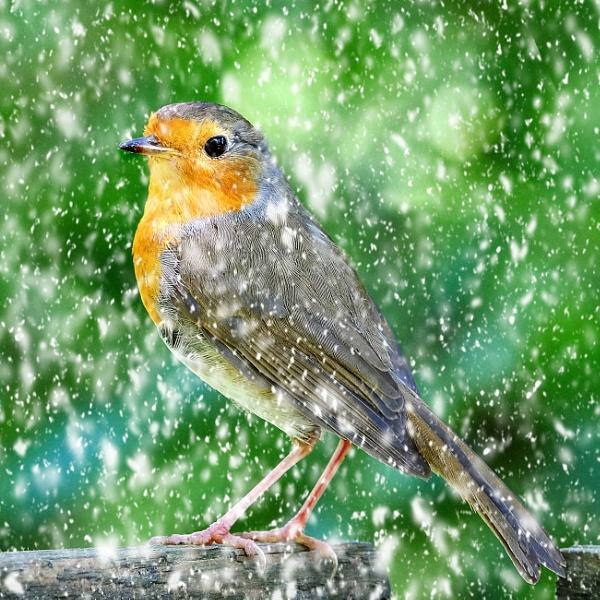 "\""Spring Snow\"". by adrianedwa"