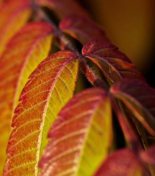 Autumn Leaves by Mrpepperman