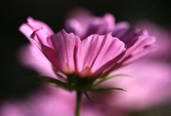 Delicate Flower by Mrpepperman