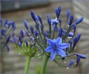 Blue Peter by Mavis