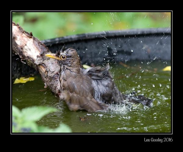 Bathtime by lesgoodey