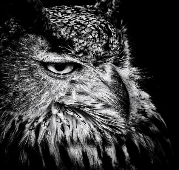 Night Owl by Kurt42
