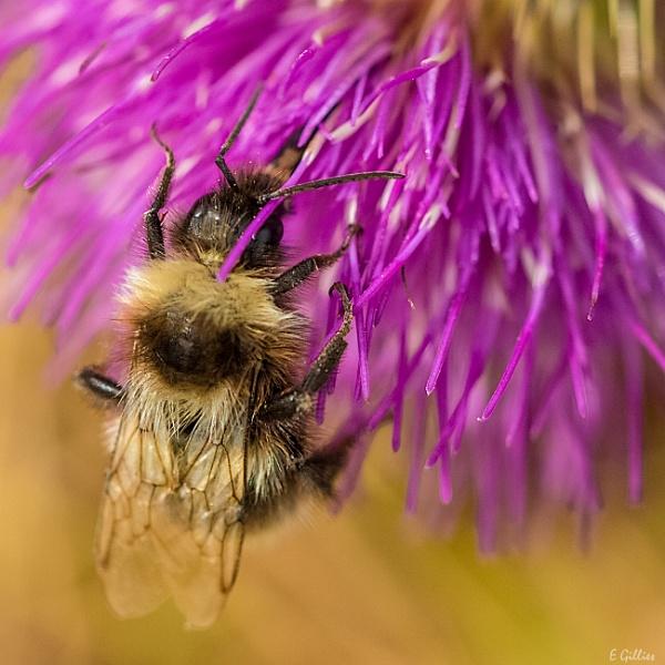 Give me the honey mummy by EddyG