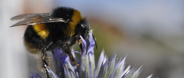 Busy Bee by LibKerr4