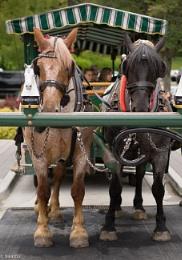Horse drawn tour - Stanley Park, Vancouver BC