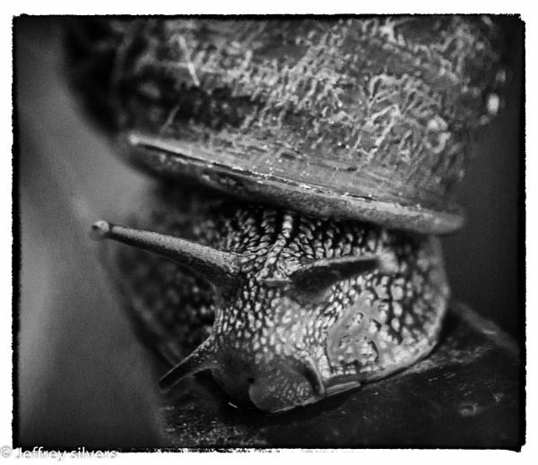 Slug by cats_123