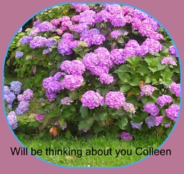 This is To Colleen from Portmeirion
