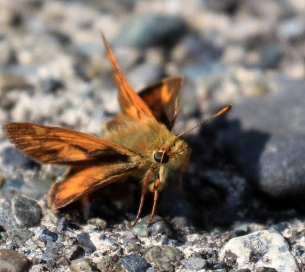 Moth  Smile by tonyguitar