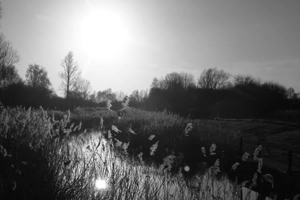 Winter Sun by wildfowler