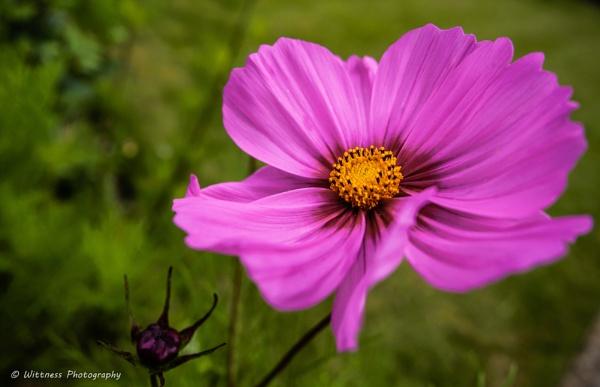British Flower by phonocar