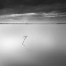 Shades of Gray by Diggeo