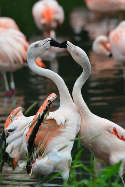 Fighting Flamingos by jimbob133