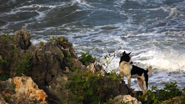 a little dog loves the ocean