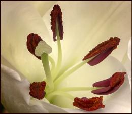 Daylily Bits