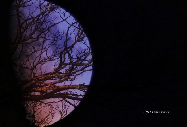 Branch invasion by dawnmichelle