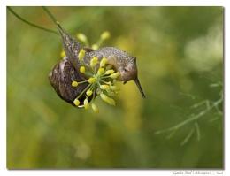 A Snail's Summer