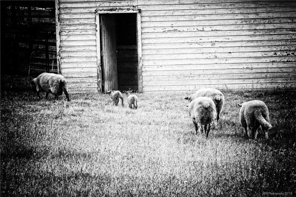 A Week on the Farm by Daisymaye