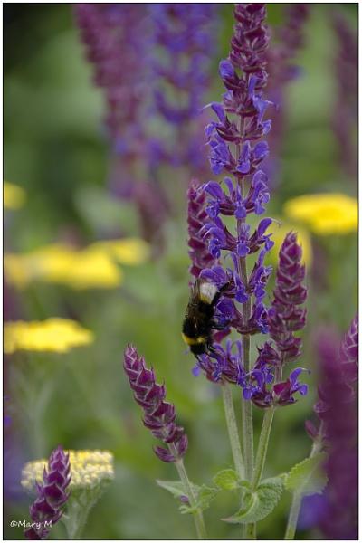 Busy Bee by marshfam19