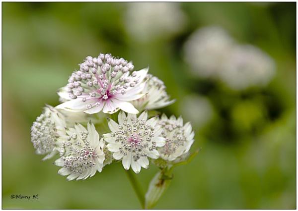 Flower No.2 by marshfam19