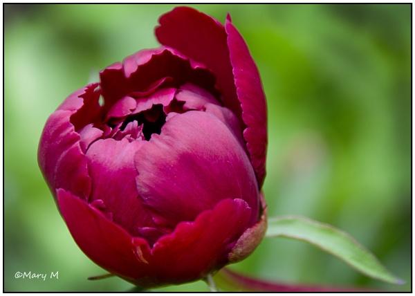 Flower No.3 by marshfam19