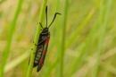 Macro Bug by markst33 at 05/08/2016 - 5:50 PM