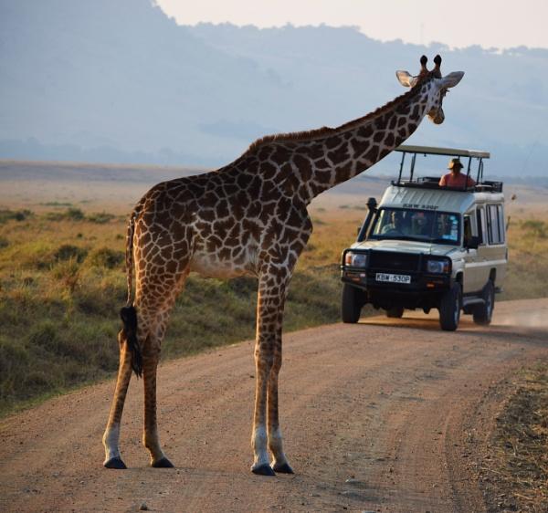Giraffe in Masai Mara by Dannielle