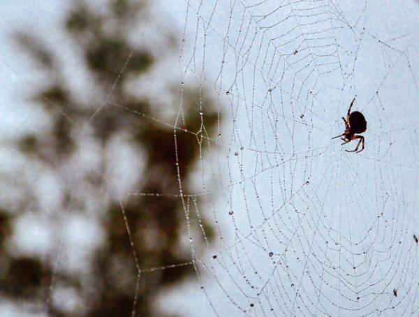 Step Into My Web by Rebeak