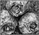 Three Bulbs by JawDborn