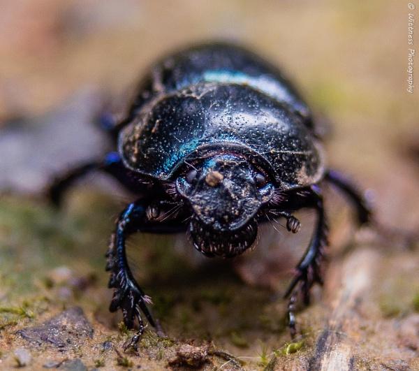 Black Beetle by phonocar