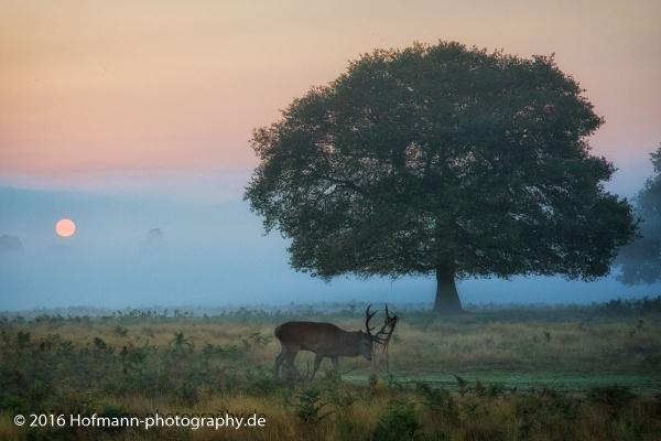 Misty morning by drbird