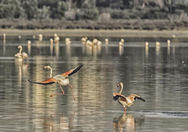 Taking Flight by jimobee
