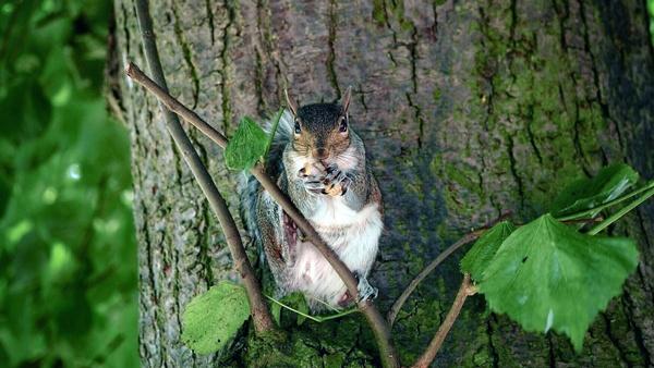 Squirrel by victorburnside