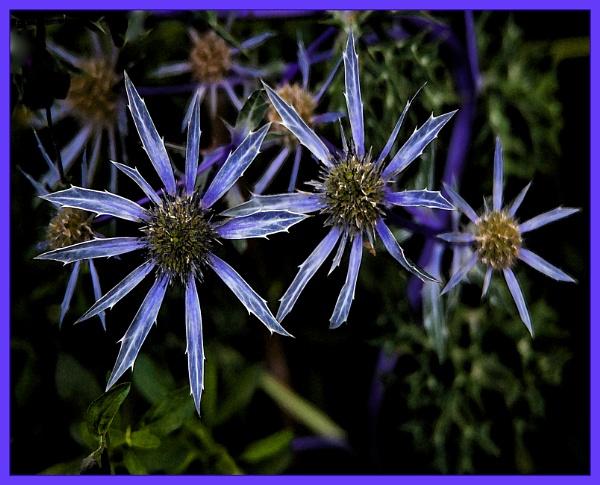 star buds by estonian