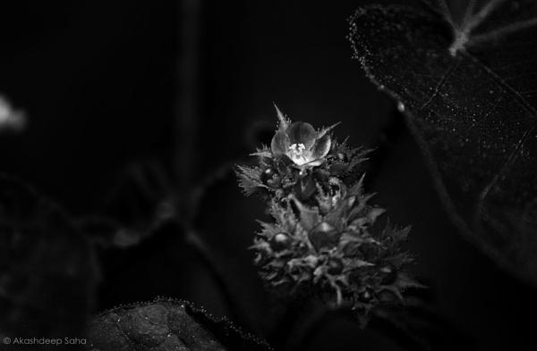 Flora-escent by AkashdeepSaha