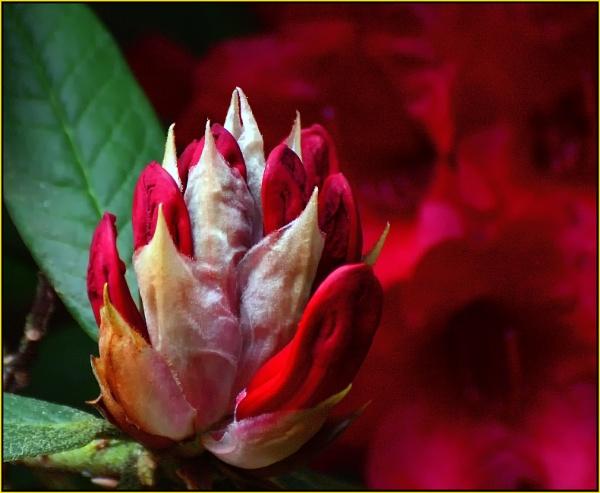 Red Bud. by Moebee