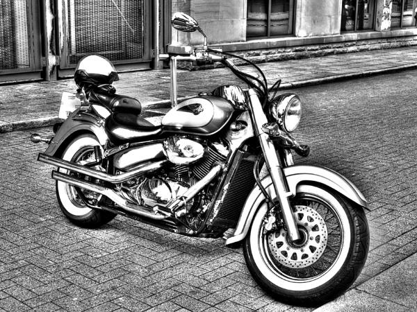 Harley by fellingmal