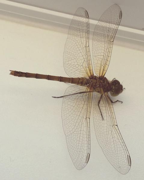 Dragon fly by mollye