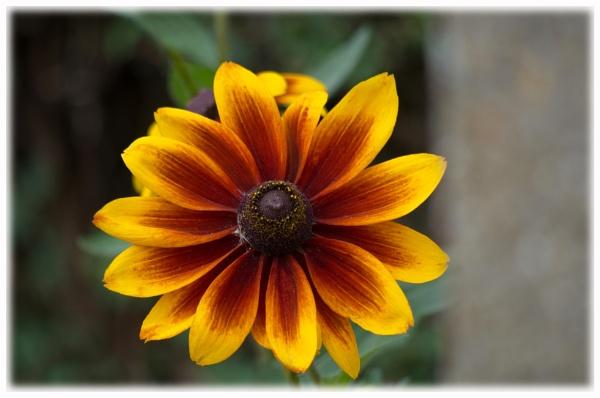 Pretty flower by alant2