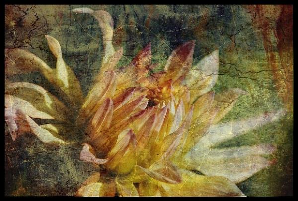 Flower Variation. by NotLostinFrance