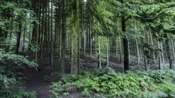 The Dark Dark Woods. by RLF