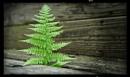 Lonesome fern by notsuigeneris