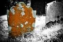 Orange lichen by notsuigeneris