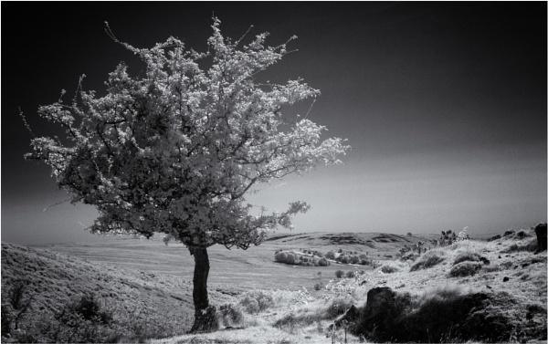 Mountain Thorn by daibev
