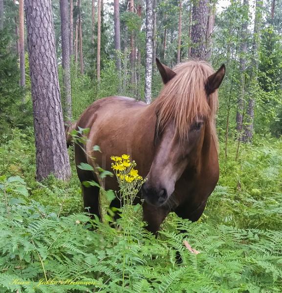Friendly horse(s). by kuvailija