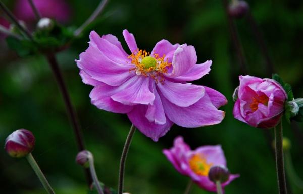 Flower Power by af1