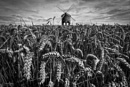 Chesterton Windmill by St1nkyPete