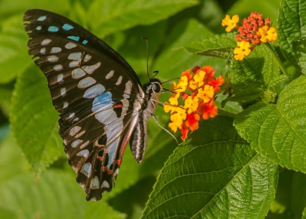 Butterfly... by kanwarmunish