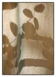 Shadows on the Curtain