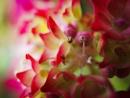 Hydrangea stamen by DaveRyder