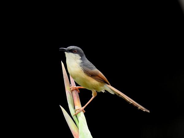 little bird by gautamc